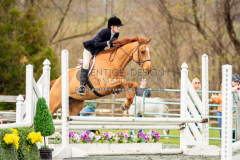 thoroughbred-hunter-1015-5055